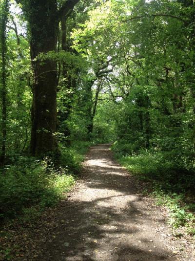 Irish woodland in Tuamgrany County Clare