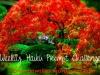 RonovanWrites Weekly #Haiku Prompt Challenge #17 Focus &Stray