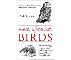 Magic & Mystery Of Birds
