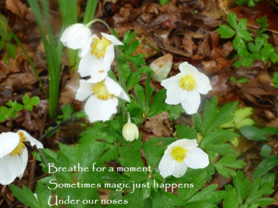 breathe for a moment, sometimes magic just happens, under our noses