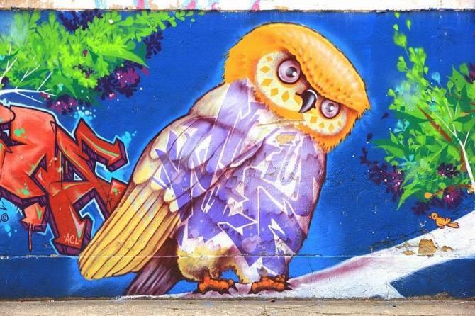 blog owl