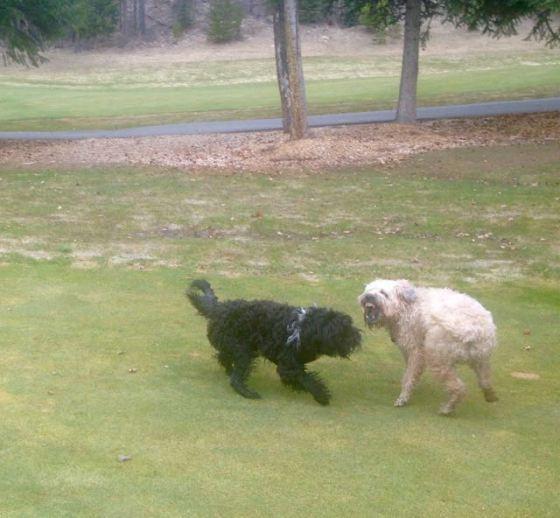 Farley and Finn