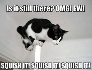 Squish It