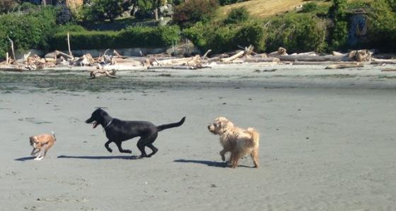 3 dogs on beach