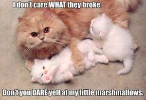 Don't Yell at My Marshmellows