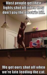 Feeding the Cat