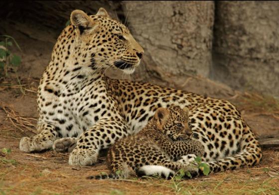 leopard-lessons-615.jpg
