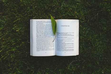 nature-grass-leaf-green.jpg