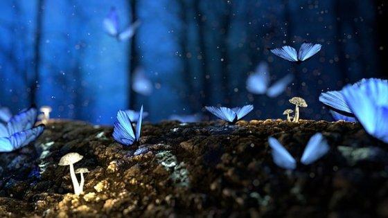 butterflies, mushroom