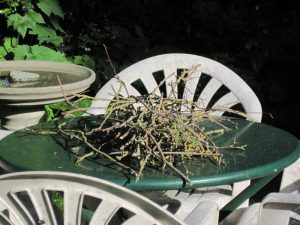 twigs from crows' nest