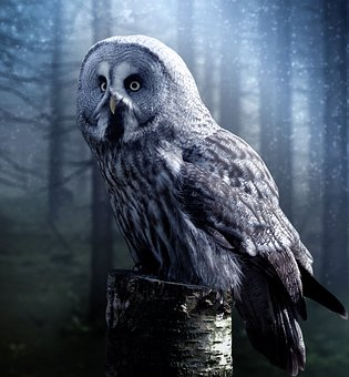owl in forest