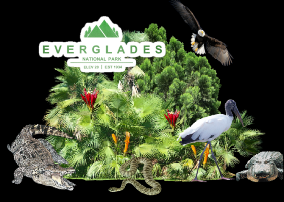 Ger everglades with bird.png