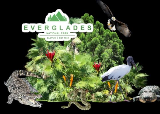 Ger everglades with bird