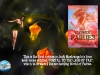 """""""A gorgeous introduction to flowers in the garden"""" – Flower Fairies: Portal To The Land of Fae Paperback Written and Illustrated by JudyMastrangelo"""