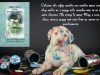 This story is about Riley, a cute, little, rescue puppy who gets into all sorts of predicaments. – Riley Gets Into Predicaments: A Granny Pants Story (The Long and Little Doggie Book 2) by PamelaAckerson